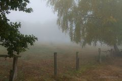 """Nebel"""