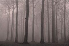 Nebel des Grauens ...