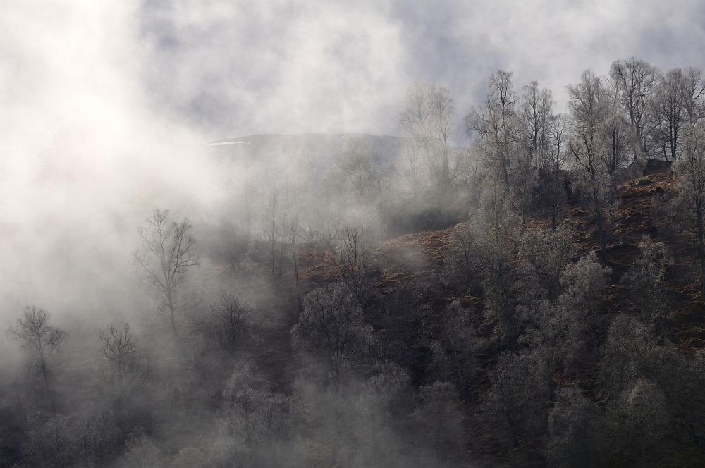 Nebel des (Morgen-)Grauens