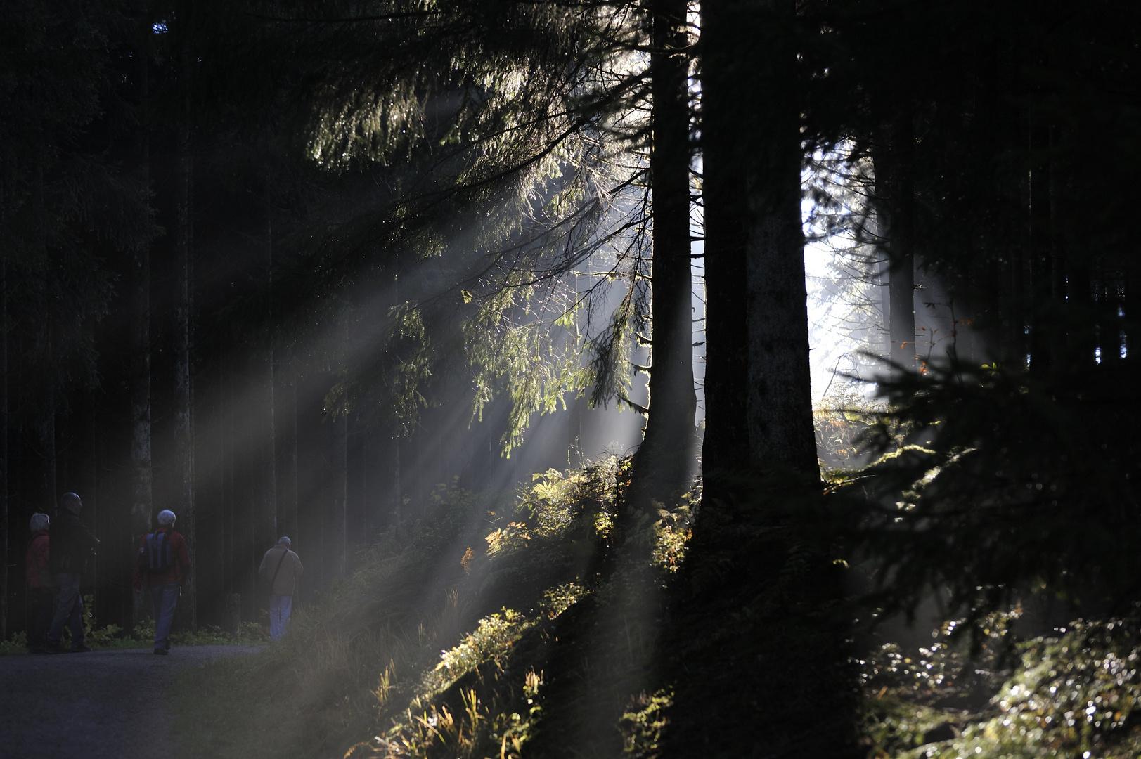Nebel-Gestalten