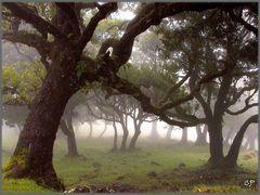 Nebel im Fanal