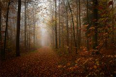Nebel im Herbstwald