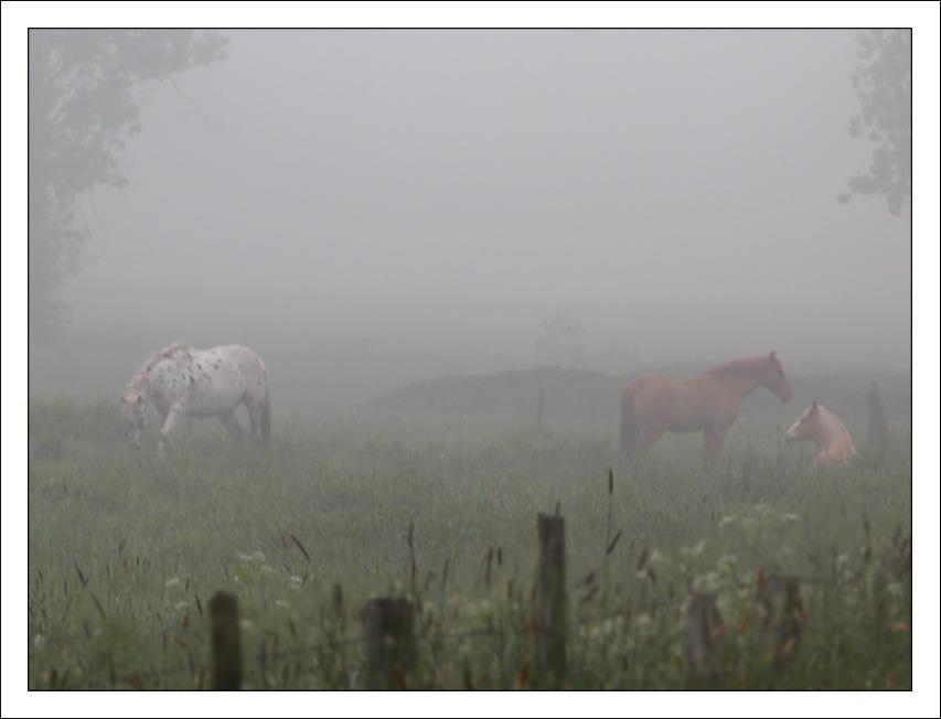 Nebel im Himmelmoor