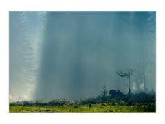 Nebel im Hochmoor ist anders...