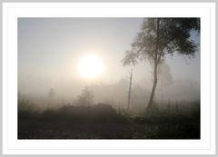 Nebel im Moor 2