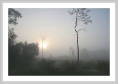 Nebel im Moor