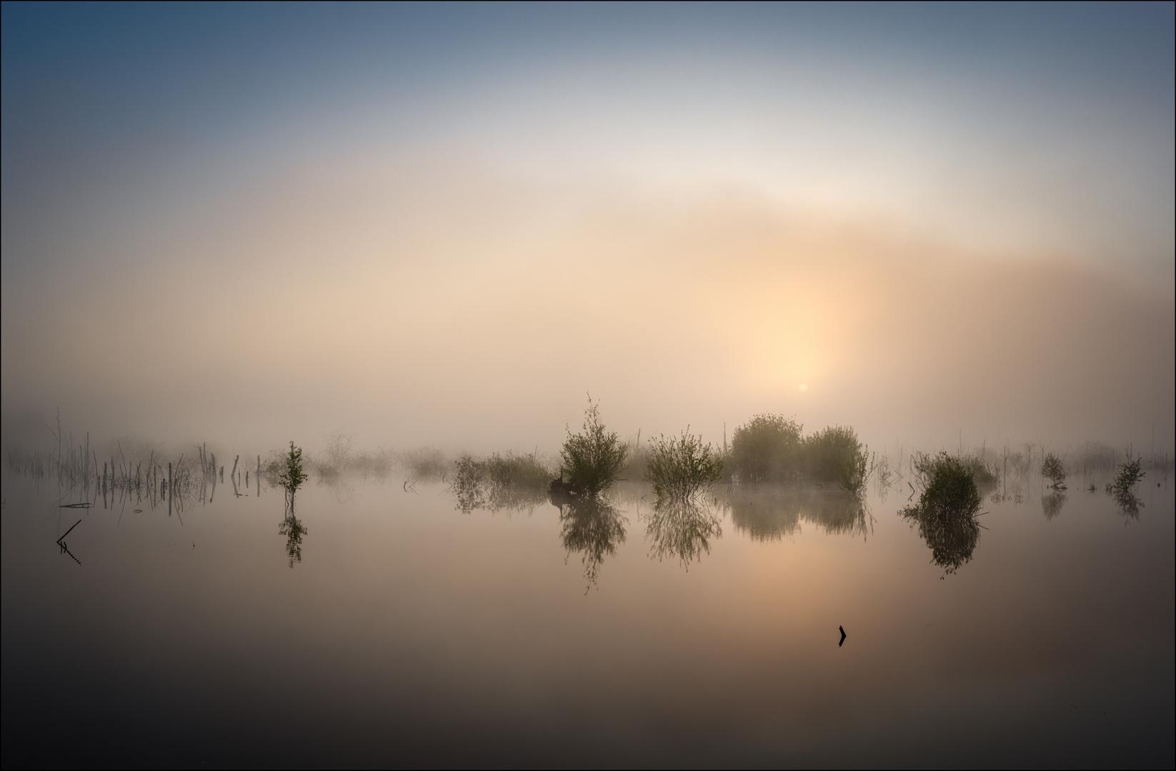 * Nebel im Moor *