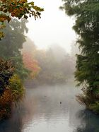 Nebel im Park. III