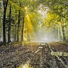 Nebel im Sachsenwald