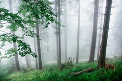 Nebel im Schwarzwald 2