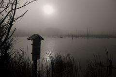Nebel im Schwenninger Moos