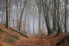Nebel im Spätherbst