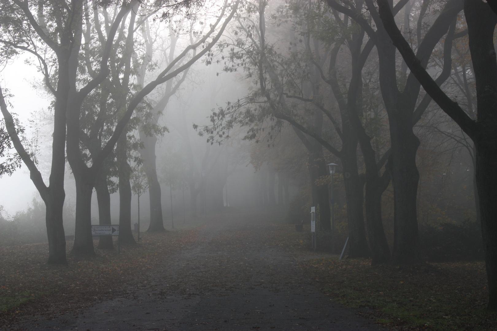 Nebel im Teuto