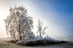Nebel im Winter 01
