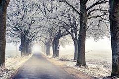 Nebel im Winter 03