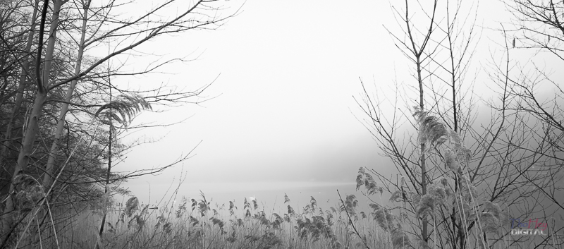 Nebel in Brandenburg