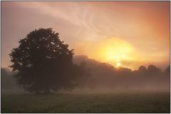 Nebel in den Ederwiesen