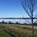 Nebel in den Vogesen