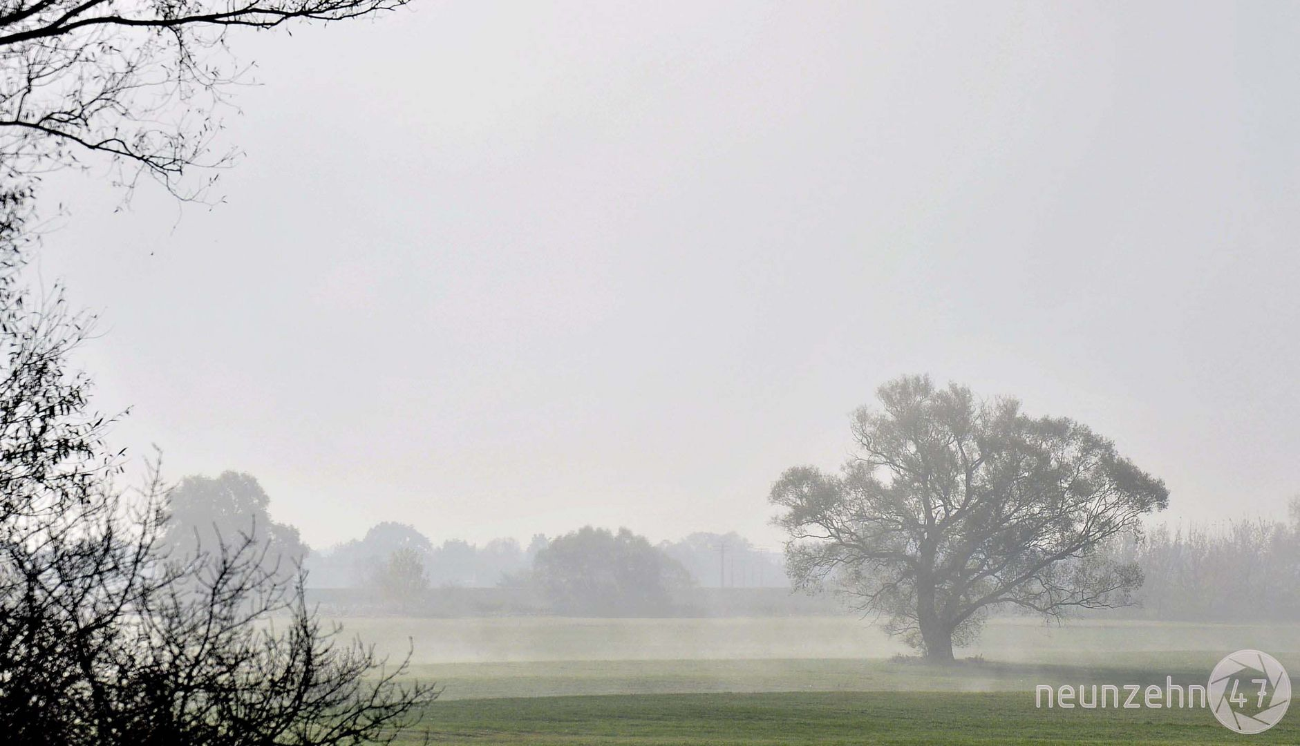 Nebel in der Donauebene
