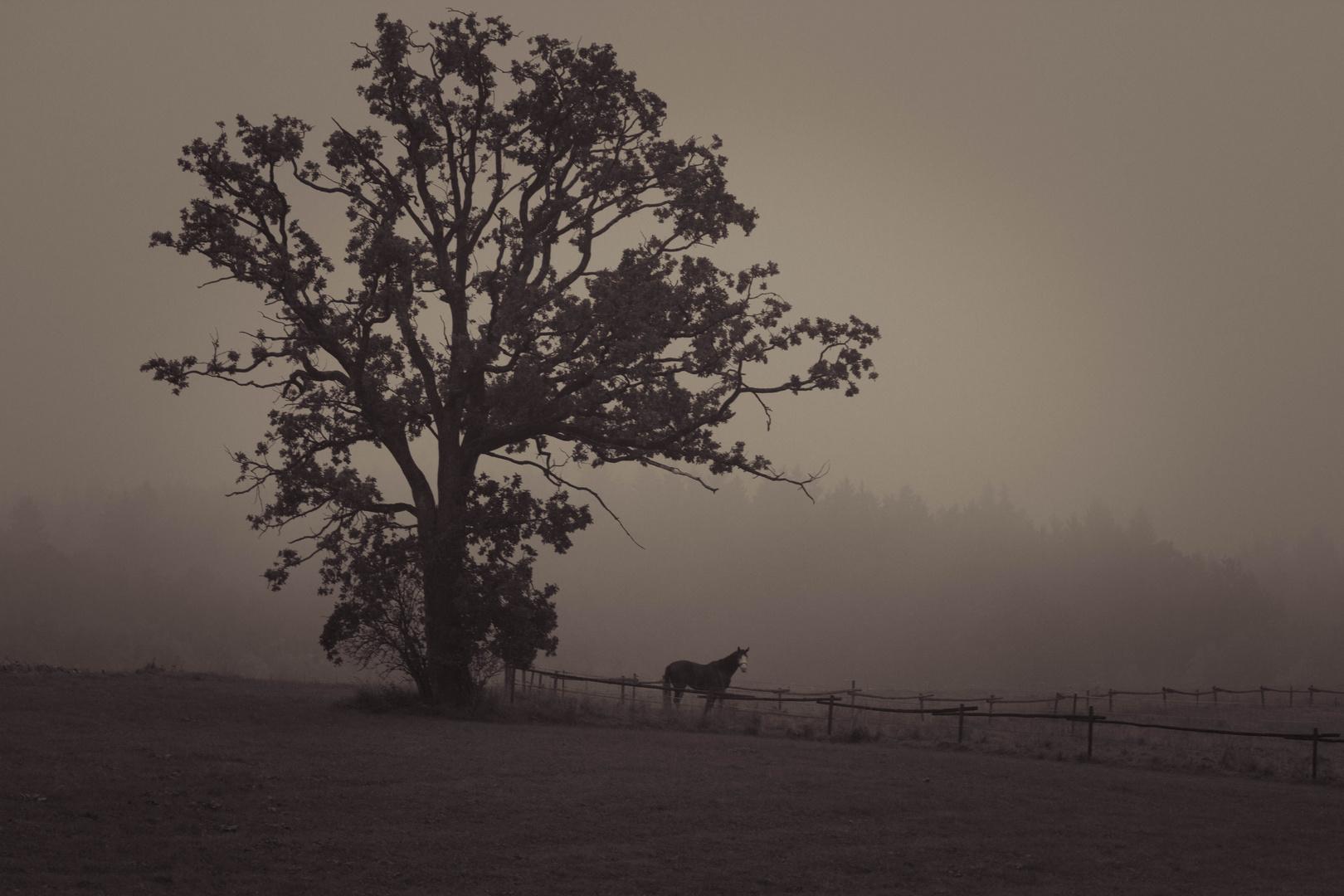 Nebel in Harpfetsham