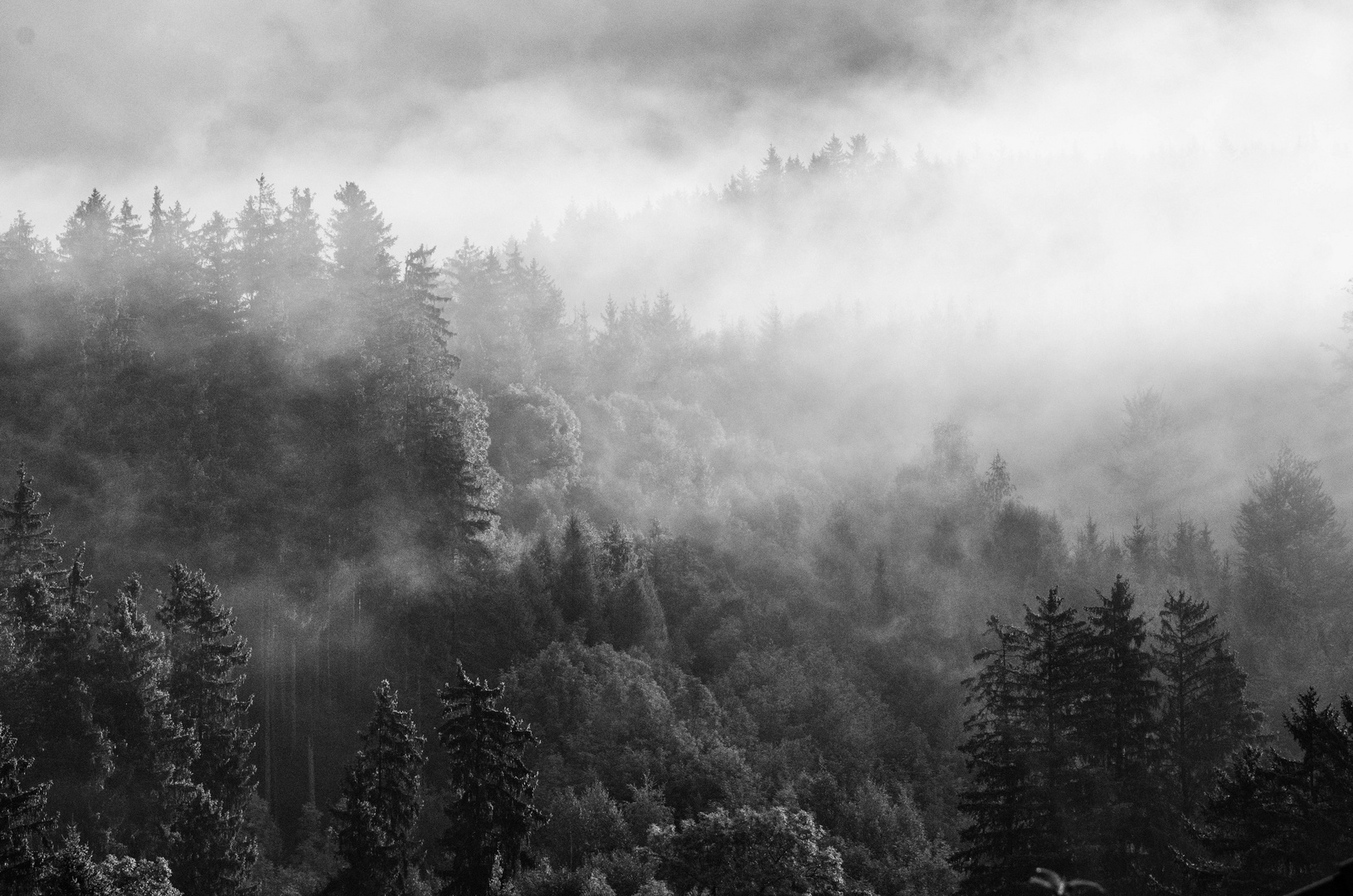 Nebel in Hopfen