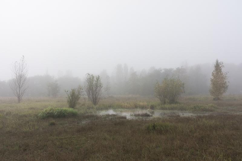 Nebel in Pankow