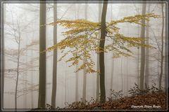 Nebel in Wittgensteiner Wäldern