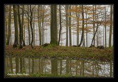 Nebel in Wittgensteiner Wäldern 2