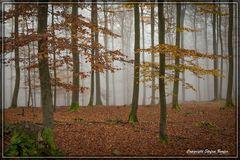 Nebel in Wittgensteiner Wäldern 3
