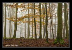Nebel in Wittgensteiner Wäldern 4