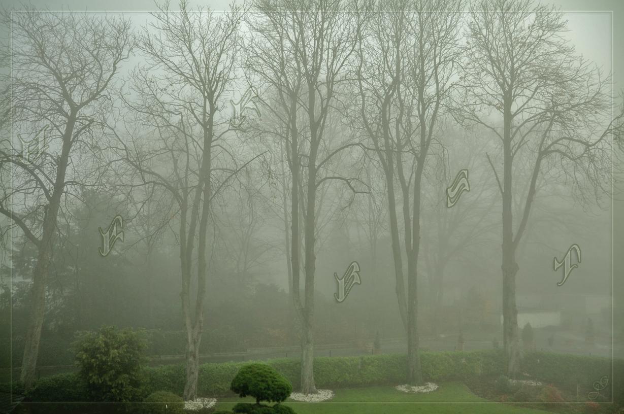 Nebel ist der Weichzeichner der Natur