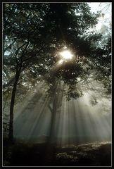 Nebel ist Leben
