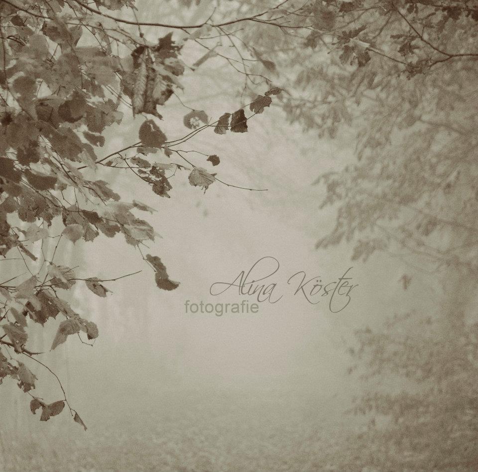 nebel ist so leise, so schön