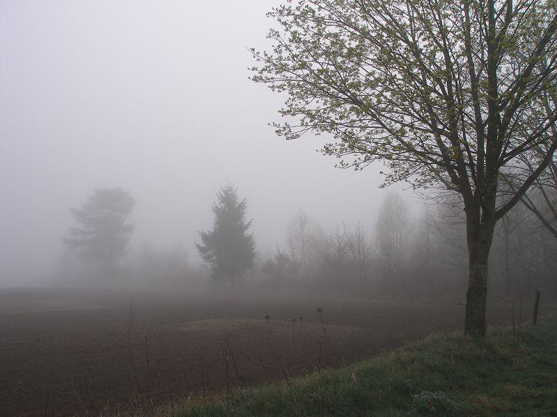Nebel kann so schön sein ...
