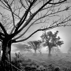 Nebel-Komposition