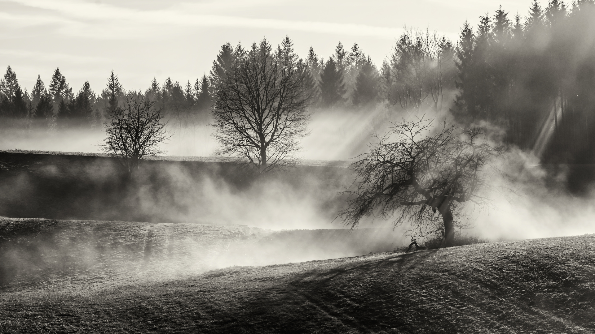 Landschaft Nebel