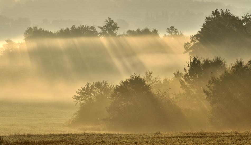 *Nebel & Licht*