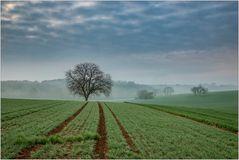 Nebel & Linien