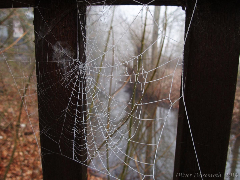 Nebel macht Netze nass