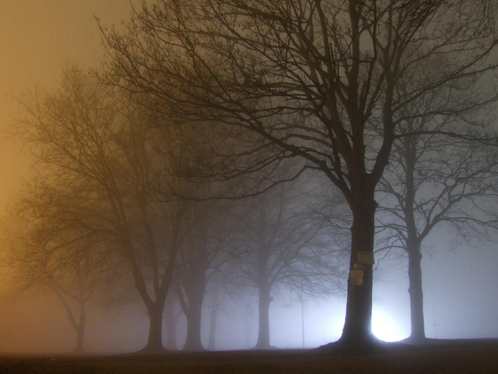 Nebel neben der Rennbahn