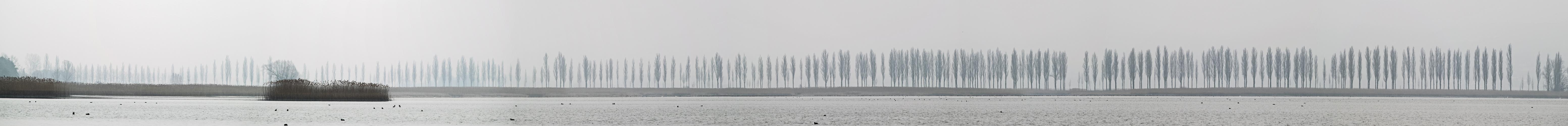 Nebel-Panorama 1