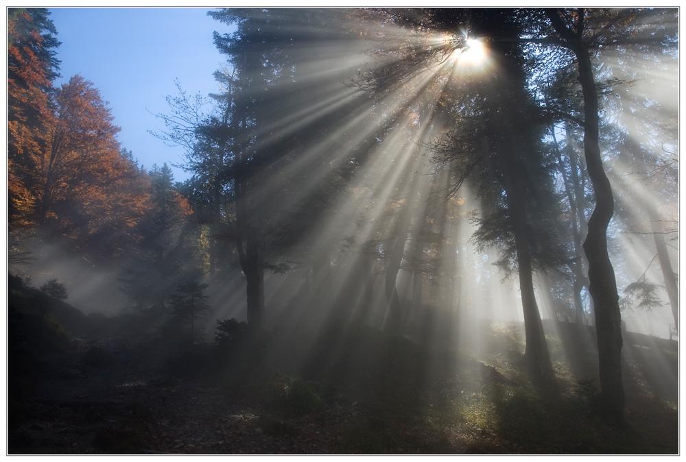 Nebel schleicht sich