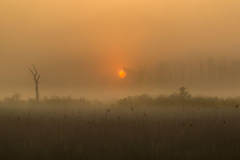 Nebel-Sonne