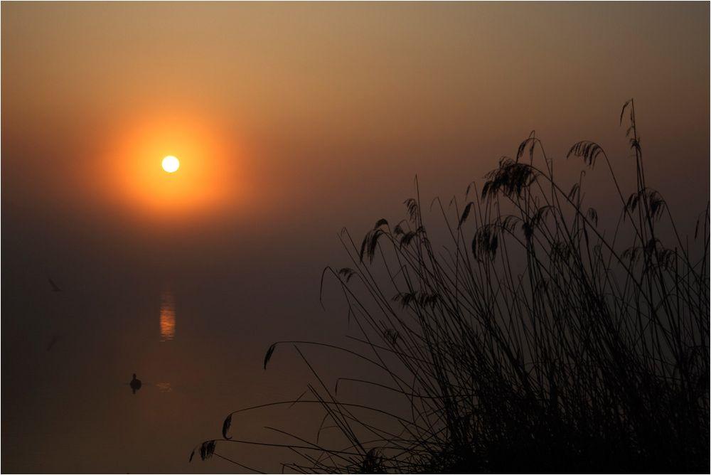 Nebel-Sonnen-Stimmung