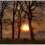 Nebel & Sonnenaufgang heute (9.3.2014) um 7:07