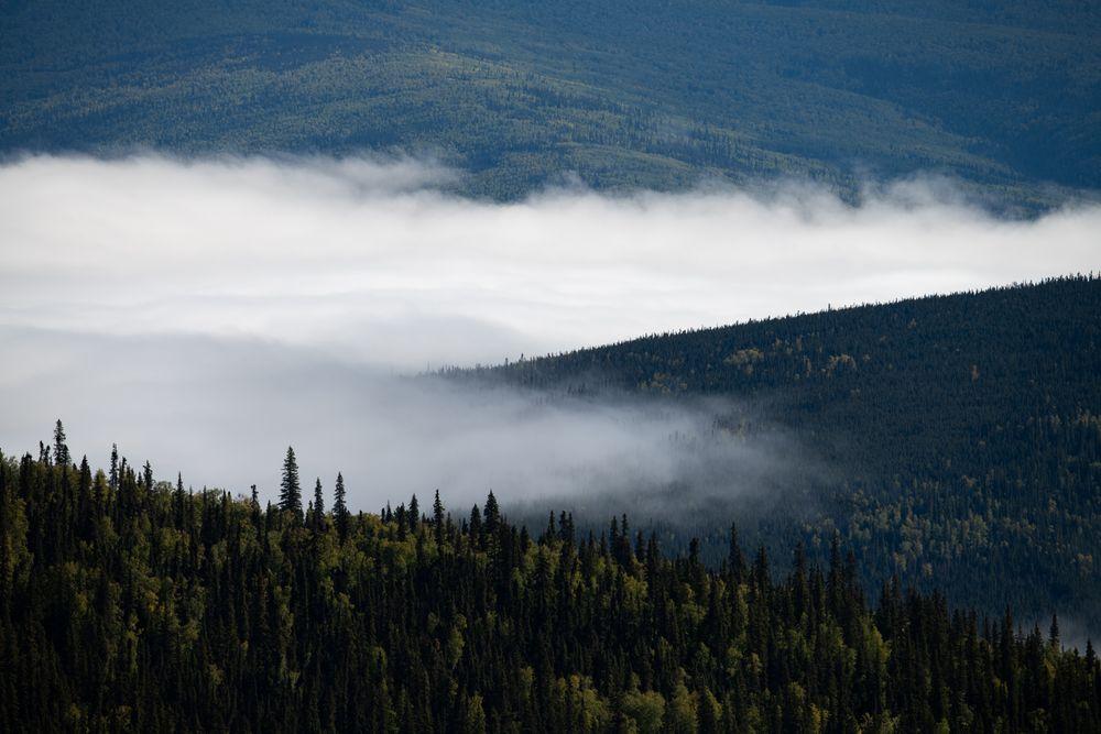 Nebel über dem Yukon