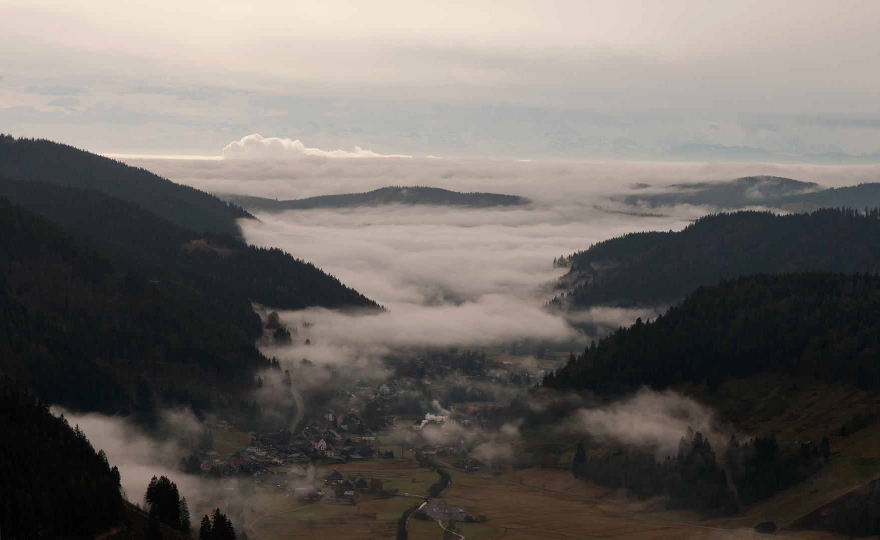 Nebel über Menzenschwand