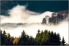 Nebel über Wittgensteins Wäldern