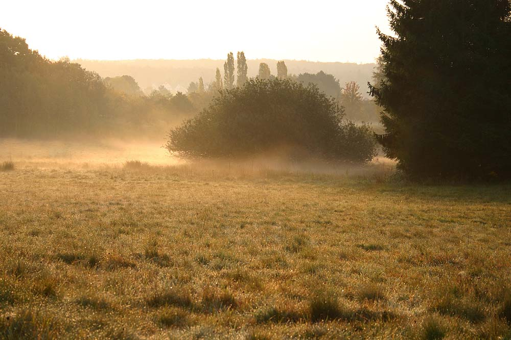 Nebel überm Kirdorfer Feld