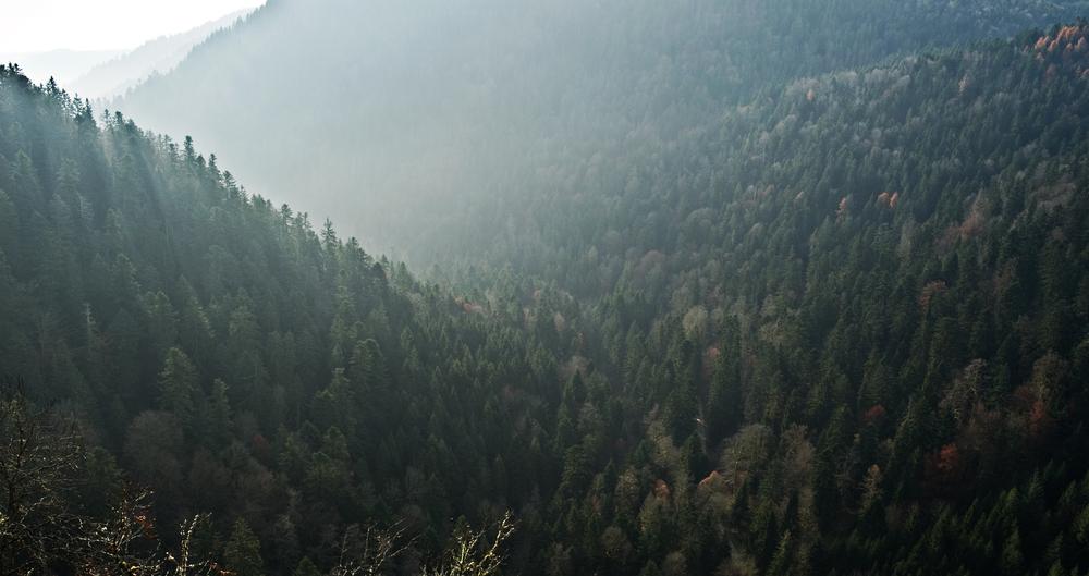 Nebel und Dunst